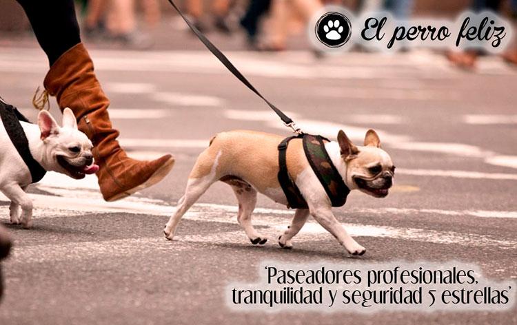 franquicia_animales_el_perro_feliz