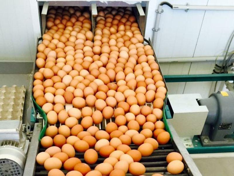 Franquicia de huevos en España