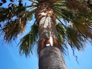Montar_negocio_digitalización_árboles