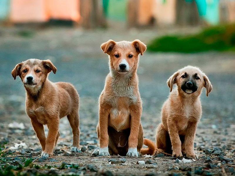 TerranovaCNC solidario en el perro adoptado