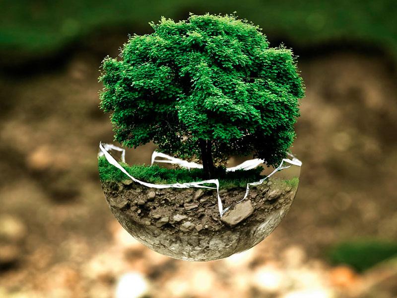 8 franquicias comprometidas con el medio ambiente